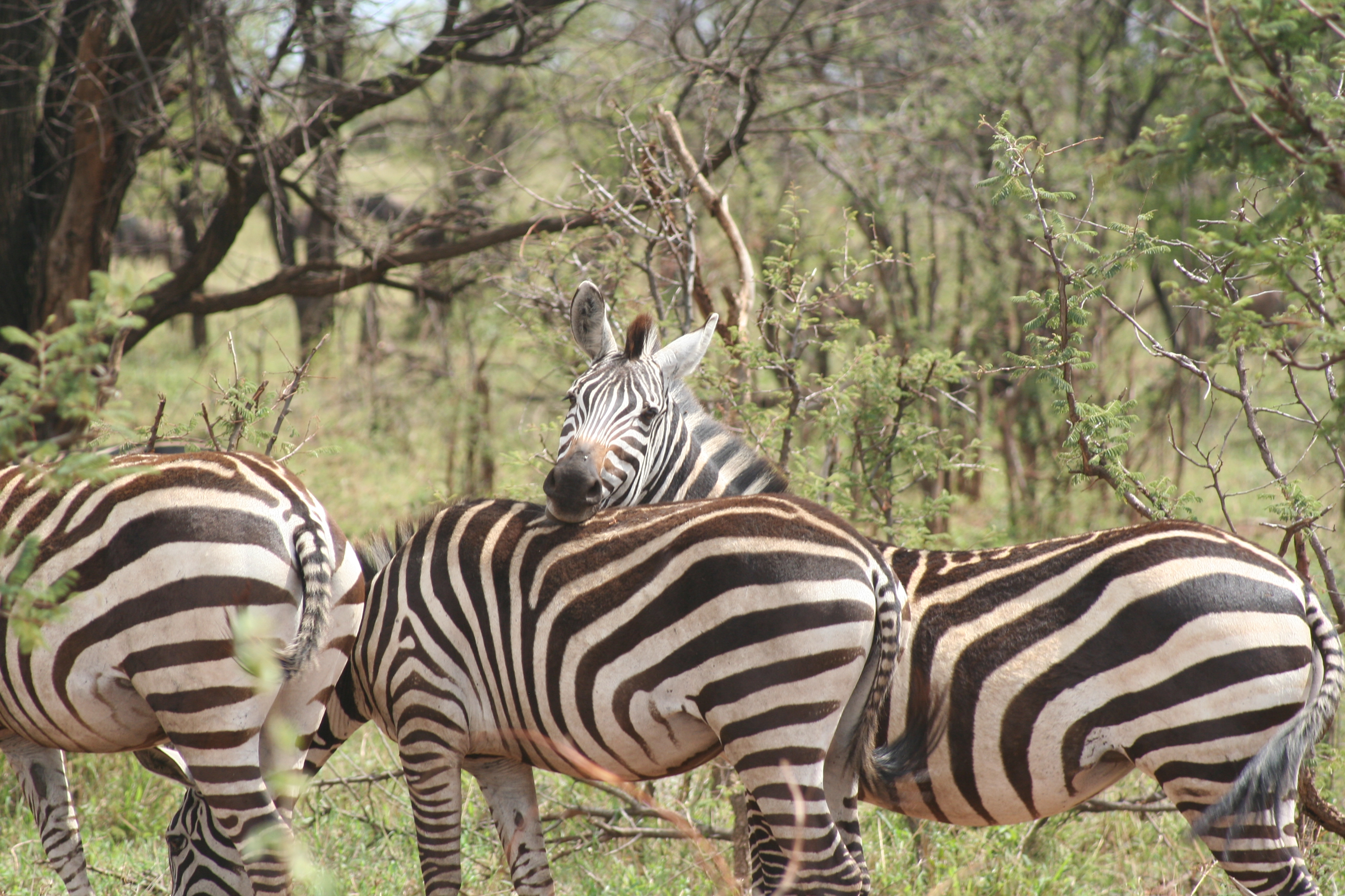 Serengeti & Ngorongoro-Crater