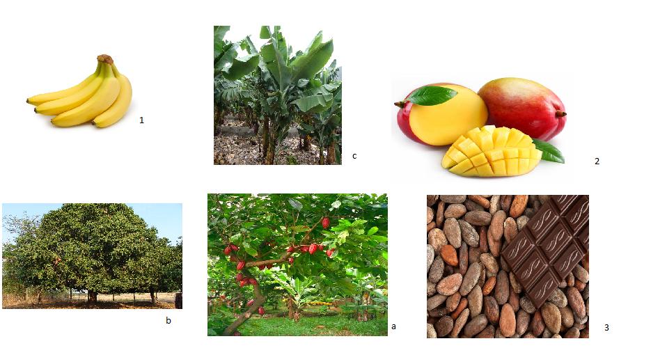 Fruchträtsel