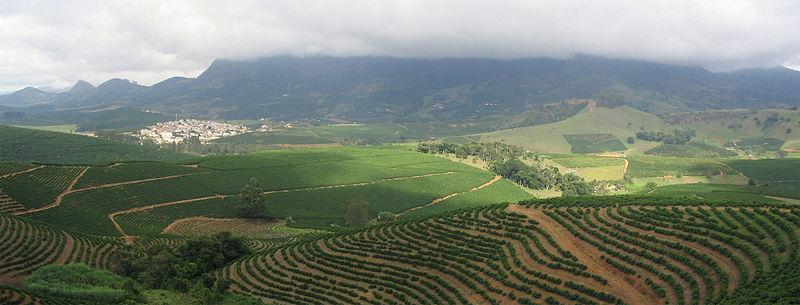 800px-coffee_plantation